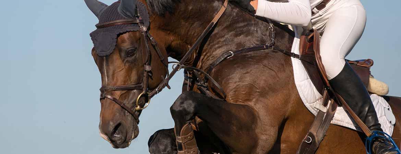 reiterliche vereinigung warendorf pferdepass